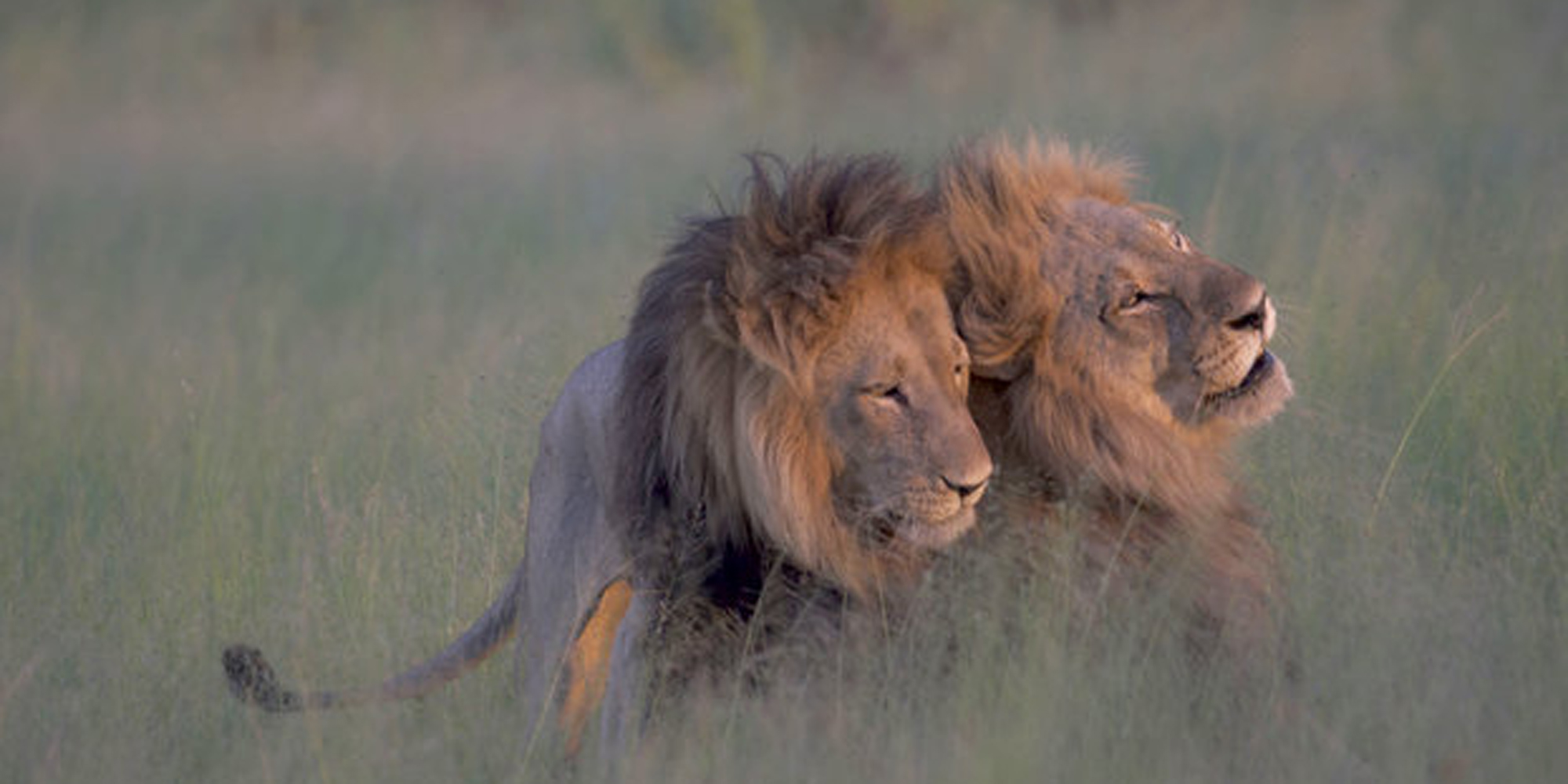 Gay Animal Couples - Can Animals Be Gay?