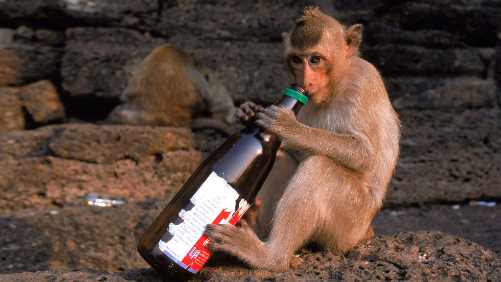 The Scientific History of Why Humans Love Drinking Booze