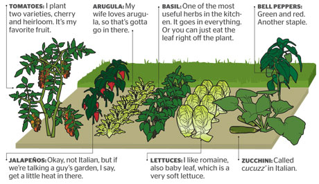 Vegetable Garden Layout The Gardening   Garden Layout Planner Designing  Your Vegetable Garden Layout
